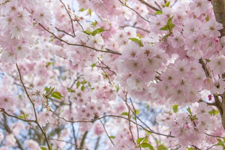 2017年の春分の日はいつ?春分の意味・暦・お彼岸などの行事も ...